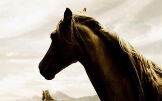 Happy-Horse
