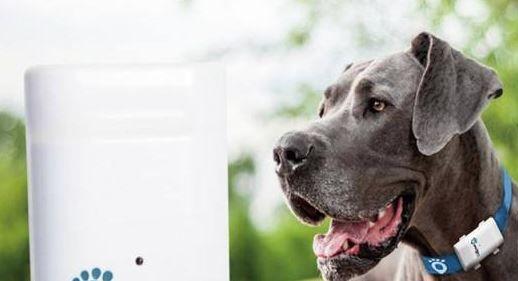 SecurePet GPS til katte og hunde