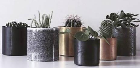 Kaktuser og potter