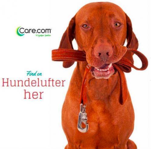 Care.com hjælper, hvis man ikke har tid til at lufte hundenen.