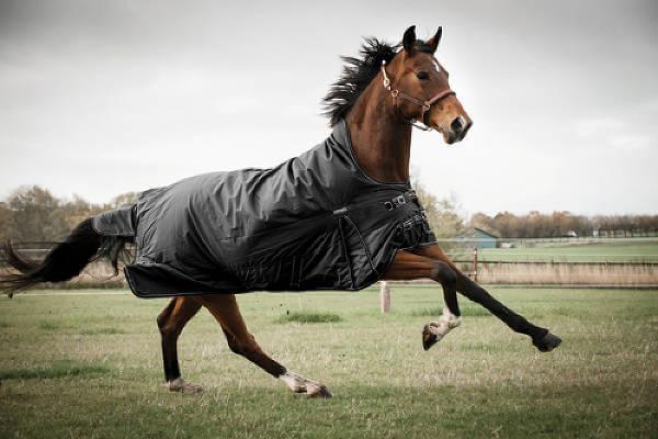Rideudstyr fra Happy-Horse