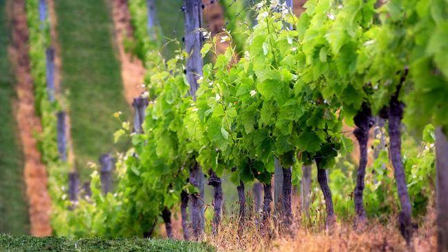 Lækre, eksklusive vine hos Philipson Wine