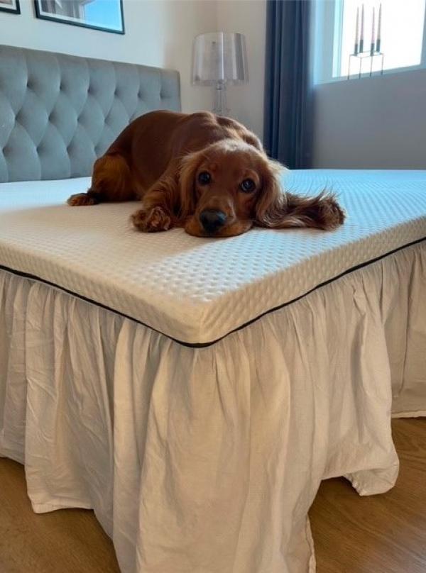 alle familiens medlemmer kan få glæde af en Emma Madras - også hundenen!