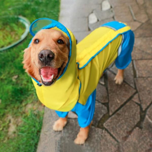 Banggood har alt, havd man har brug for - også til hundenen!